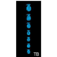 Fret marker decals for Ukulele - Pineapples in Abalone blue - JIS-29